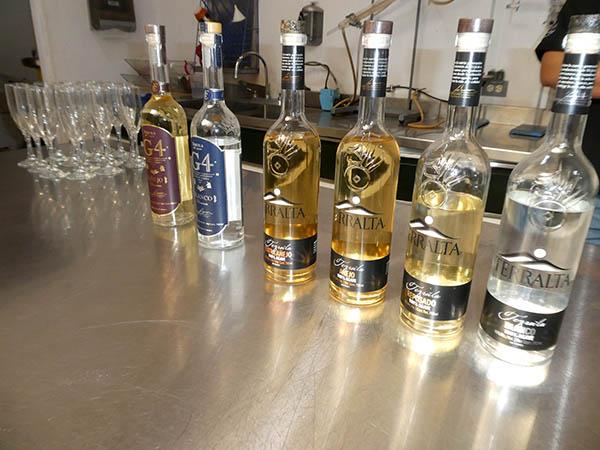 G4 and Terralta tequilas, El Pandillo, Jesus Maria, Mexico
