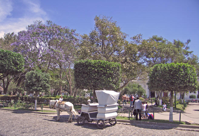Colonial style horse-drawn carriages for a tour