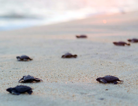 Releasing baby turtles in Puerto Escondido, Mexico