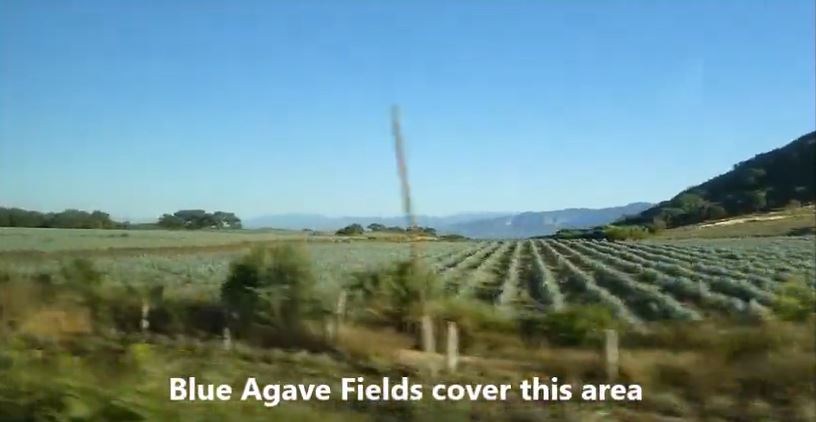 Agave fields in Jalisco, Mexico